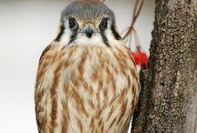 beautiful birdies / by Katie Pierce