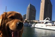 Pet Friendly San Diego