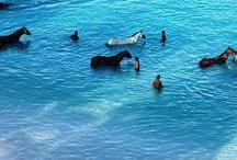 Barbados - Caribbean islands / Beautiful Barbados in the lesser Antilles - Caribbean / by itzcaribbean Travel
