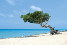 Aruba - Caribbean islands / Amazing Aruba a favourite holiday destination, which along with Curaçao and Sint Maarten, make up the Dutch Antilles. / by itzcaribbean Travel