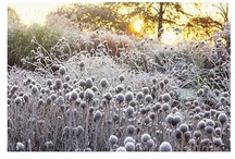 Winter im Garten  / Stimmungsvolle Winterzeit im Garten