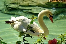 """All God's Creatures / """"Until one has loved an animal, a part of one's soul remains unawakened.""""   ~ Anatole France"""