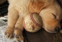 puppydog / by Olivia Socha