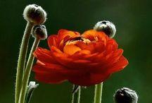 bountiful blooms / by Katie Pierce