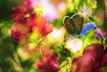 ƸӜƷ  Frühling