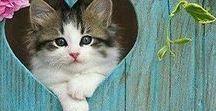 Katzen - die schönsten Katzenbilder / Aus Liebe zur Samtpfote ... die schönsten Katzenbilder #Katzen #Katzenbilder