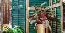 Urban Jungle - grün wohnen / Der angesagte Jungle-Trend: Grüntöne und exotische Pflanzen. Wem die Pflege von Grünpflanzen nicht zusagt, kann Kissen oder Bettwäsche mit entsprechenden Motiven verwenden.