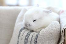 Amo i Conigli