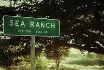 Sea Ranch / by Gabriela Bush