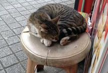 City of Cats / Cats are everywhere in Istanbul. They rule this city. #cats #kedi