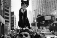 Krazy Kats / Feline frolics & fun