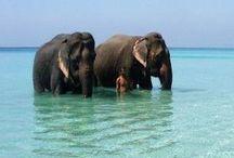 India & Goa