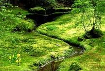 Moss Garden, The Bloedel Reserve