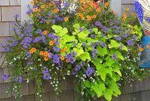Flower Garden // Lawn