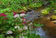Gardens / by Marcia