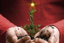 Christmas & New Year / by Татико Лиса