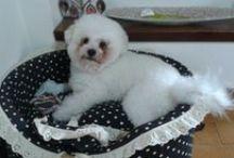Kiwi my little dog / Il mio bichon bolognese