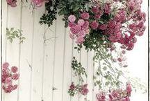 garden plant flowerdeco