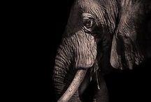 cennetin kökleri / filler ve filli şeyler