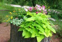 Garden Amazing / Pins about garden amazing