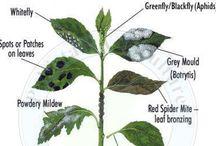Puutarhavinkit ♡ Gardening tips