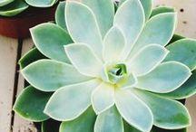 kwiatowo, roślinnie