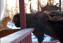 Mostly Moose.. / Being from Maine I totally fell in love with moose ( once I left home).... I am trying to bring some home to my home now in Florida / by Donna Cofer