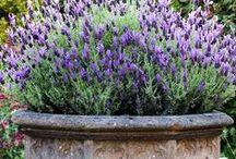 Outdoors DIY, Gardening & Decor..