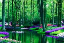 ✤ Netherlands