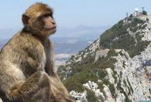 ✤ Andorra, Monaco, Gibraltar, San Ꮇarino