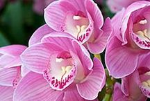Garden ~ Orchids / Orchids ~ If I had a flower for every time I thought of you, I could walk in my garden forever. ~ Alfred Lord Tennyson  This is a public board designed to include those that have a love for orchids! ~ If you would like to join just comment on one of my pins. Jill Worley (jw2012nm) No spam allowed! I check this board regularly and will remove any unrelated pins. Please be courteous ~ do not repeat pins. Thank you!