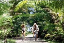 Bora Bora Honeymoon / Places to go and things to do for your perfect honeymoon in Bora Bora