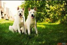 ChepkaDog - es / Imágenes de alta calidad y fotos de alta resolución de las razas de perros / by Olga Chepka
