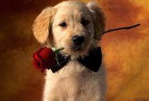ChepkaDog - pt / Imagens de alta qualidade e fotos de alta resolução de raças de cães / by Olga Chepka
