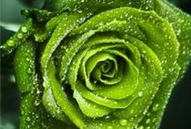 Green Love / by Mary Desrosiers