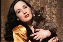 Cat People  / Celebrities & Cats