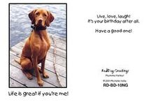 Vizsla Love / RedDog Greeting Cards by Michelle Vella featuring her Vizsla Harley 1999-2012 - Cards no longer available. Contact Michelle for custom illustrations at michellevella.com