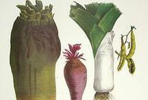 农动植物。画 / by 雨 伞
