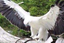 ''Kuşlar - Birds- Pájaros - Passaros - Vögel'' / Kuşlar - Birds- Pájaros - Passaros - Vögel