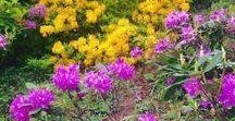 "'' Çiçekler - flores - flowers -Blumen """