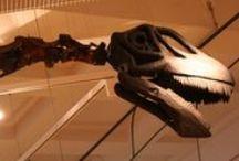 The Rutland Dinosaur