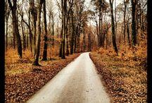 my paths