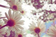 Butterflies ♥ Vintage Flowers