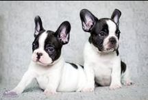 puppies lovely,