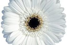 White / by Judy D