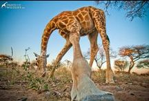 ADVENTURE In Africa / Inspiring Travel Articles, Travel Itineraries and Photography from Africa.