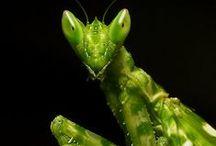 A Bug World