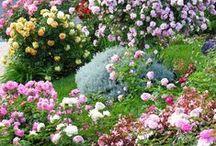 BAHÇE garden