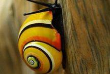 Mollusks & Slugs Oh My