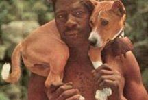 basenji the dog